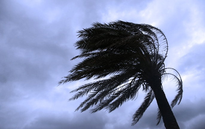 Palm Tree Blowing in Wind for Hurricane French Door Astragal